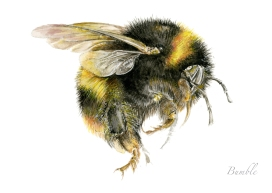 bumble-bee-painting