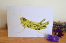Grasshopper card 1