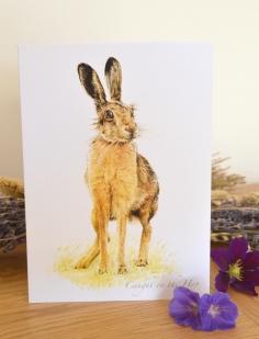 Hare card 1