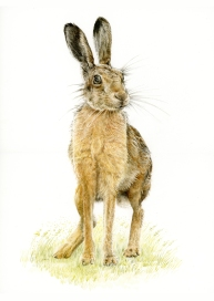 brown-hare-painting