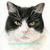 Black & White Cat 2