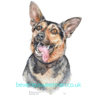 German Shepherd Dog 2