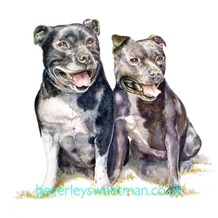 Staffies