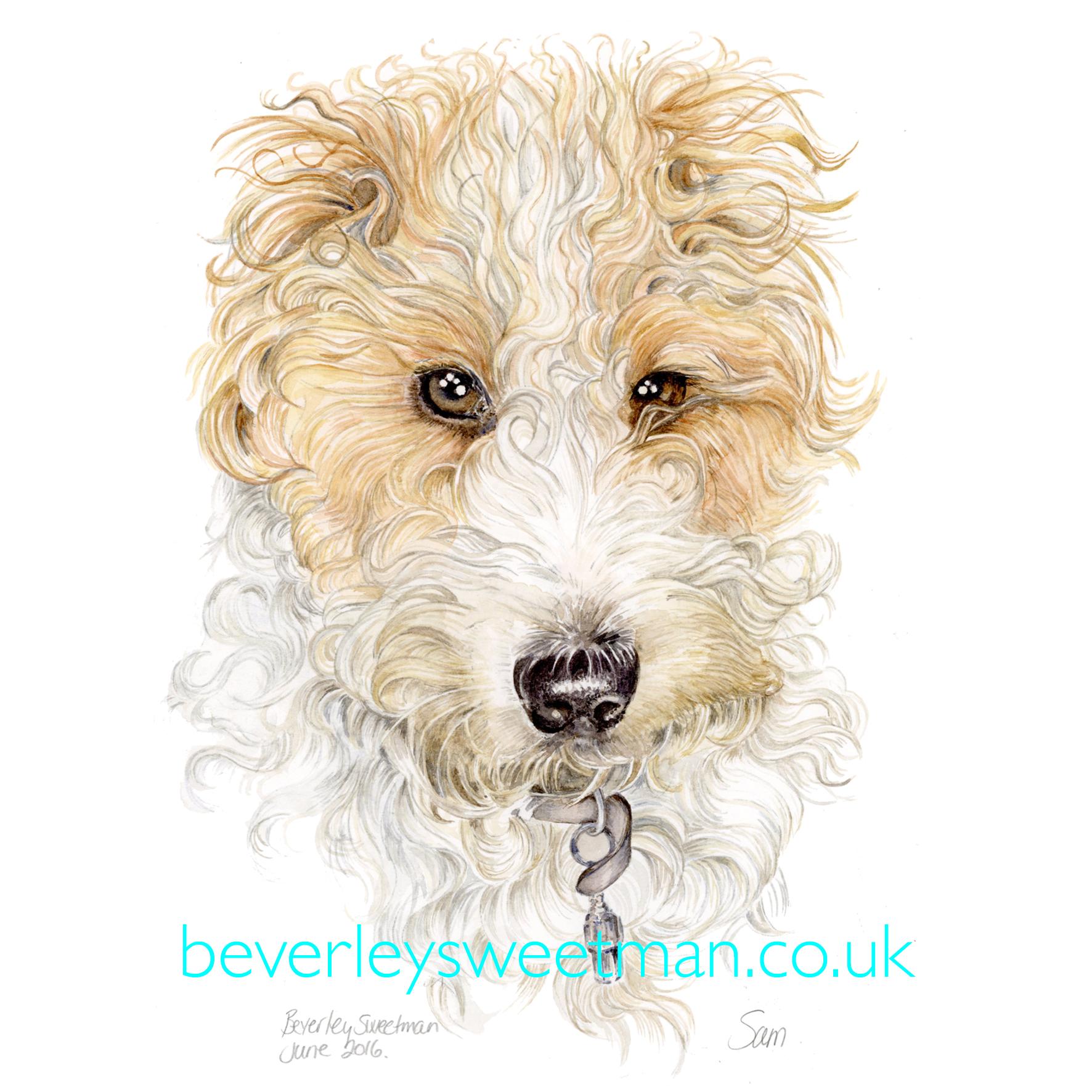 Recent Pet Portraits | Beverley Sweetman – Artist
