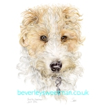 Wire Haired Terrier