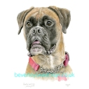 Maggie_ Boxer Dog FB