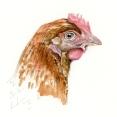 Chicken x3 ways2