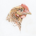Chicken x3 ways3