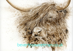 Hamish FB_Highland Cattle