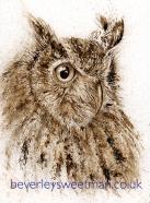 Owl - Keeping an eye