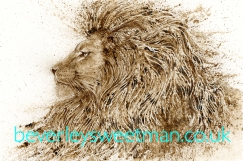 lionwn2lowreswithweb