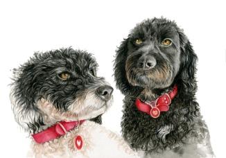 Georgies Dogs MedRes