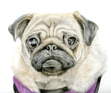 pixie-pug-head